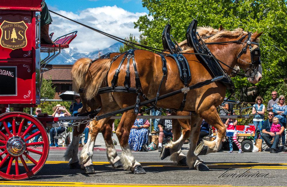 Mule Days TD-22.jpg