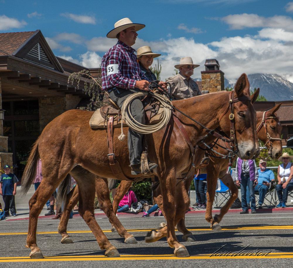 Mule Days TD-34.jpg