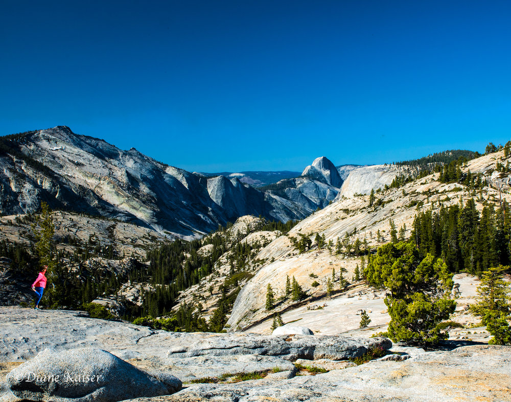 Taken at Olsted Point. The iconic granite Half Dome is visible in many areas of the park, but we pulled over here to get a different view.  To the left of Half Dome is the northwest face of Cloud's Rest at 9,926 feet above sea level. Its face drops nearly 5000 feet to lower Tenaya Creek.