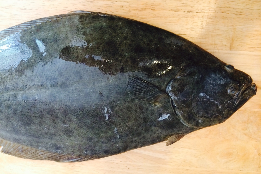 California Halibut (California Flounder) Scientific name:Paralichthys californicus How it was caught:Pole-caught Port of landing: San Francisco, CA