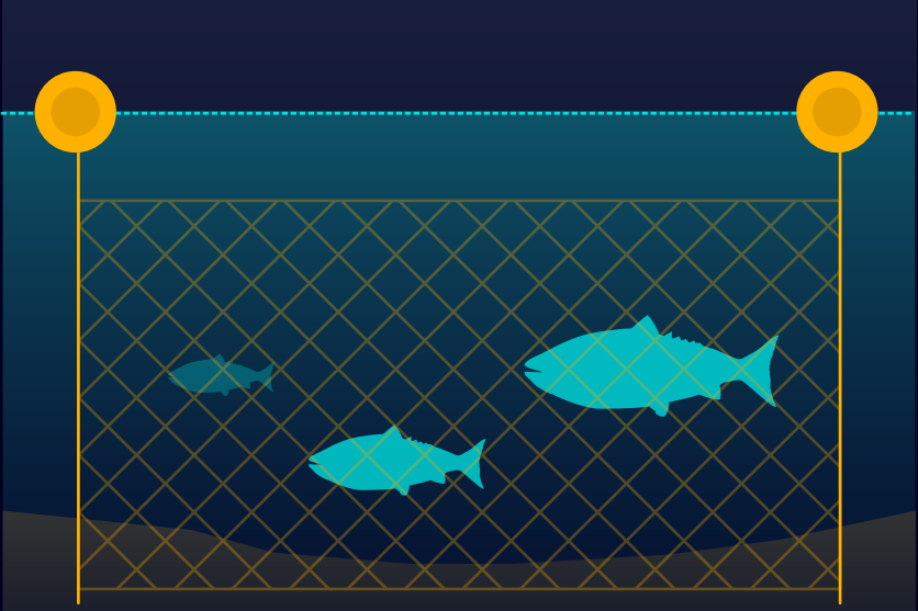 Fishing Gear Type: Gillnet Gillnetting employs vertically hanging nets that are suspended by floats on the top line and are anchored to the seafloor or weighted on the bottom line.  Graphic: © Ocean Health Index