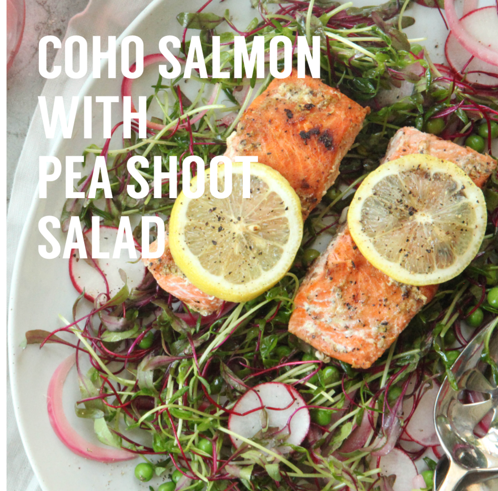 coho salmon with peashoot salad - sustainable seafood recipes