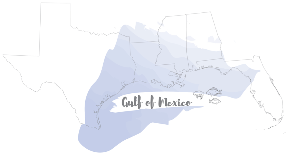 Gulf of Mexico fisheries