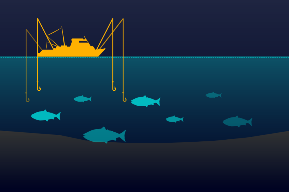 Fishing Gear Type: Troll caught   Trolling is a method of fishing where one or more fishing lines, baited with lures or bait fish, are drawn through the water.  Graphic: © Ocean Health Index