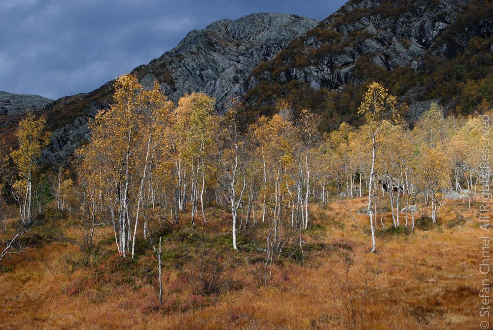 Autumn in Øvstedalen II.