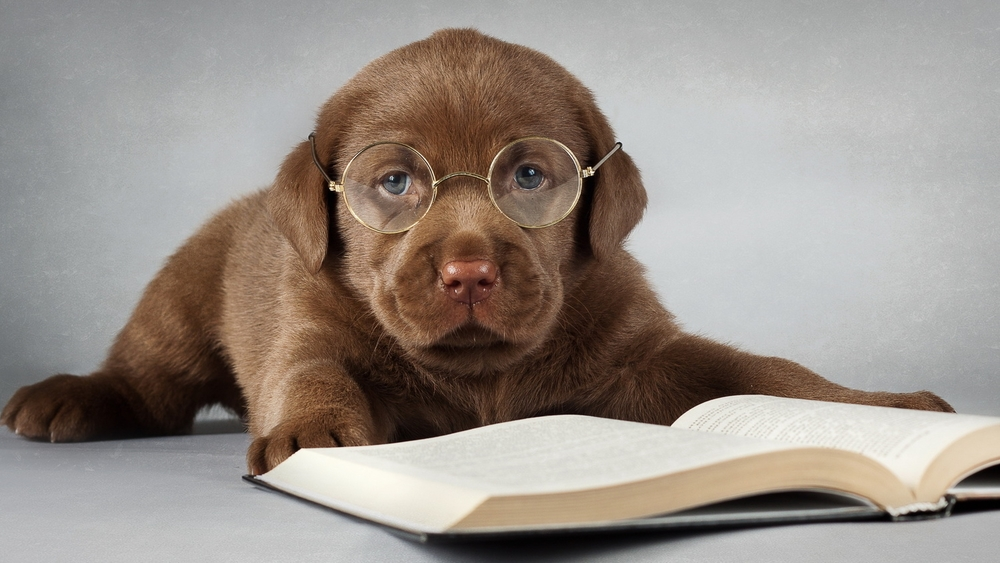 Bring Fido: Our Optical is Very Dog Friendly