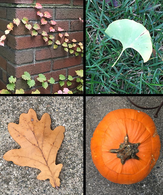 Ivy, a  Ginkgo  leaf, an  Oak  leaf, and the top view of one of our Halloween pumpkins.