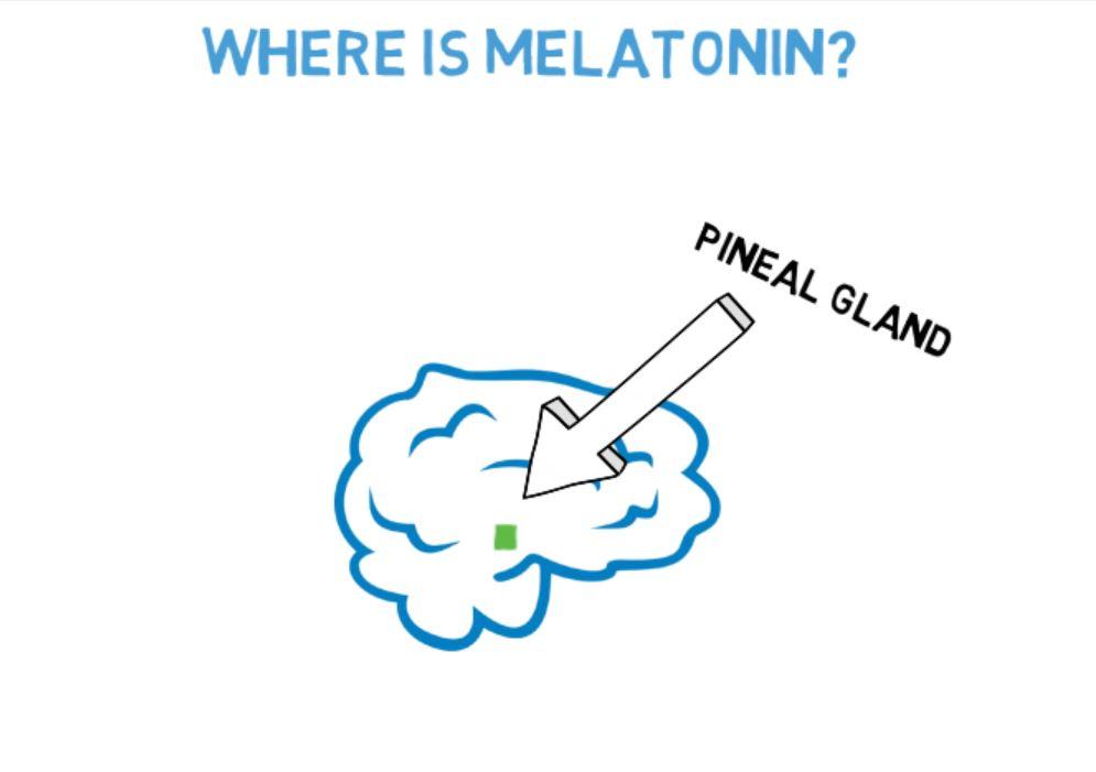 Where is melatonin.JPG