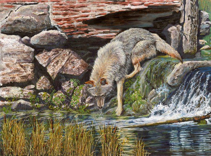 Vande Berg 5, Thirsty Visitor at Mission Trails Dam,  Oil, 18 X 24,.jpg