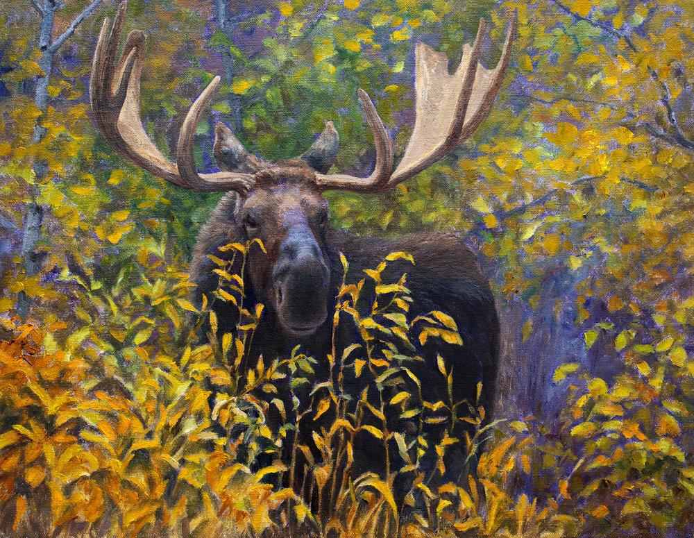 11 - Bull!, 11 x 14, Oil