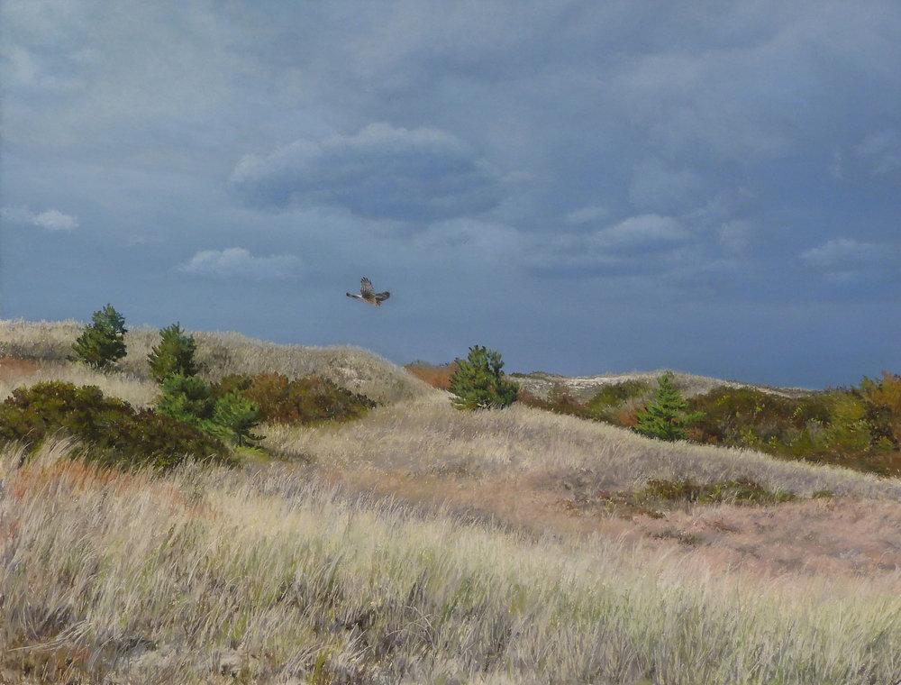 24 - Harrier over Dunes, 17 x 22, Pastel