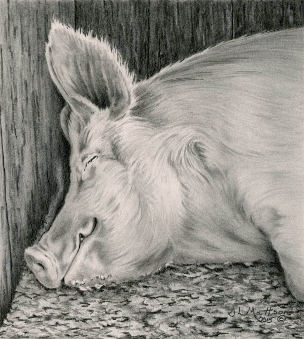 20 - Forty Winks, 7 x 6, Graphite