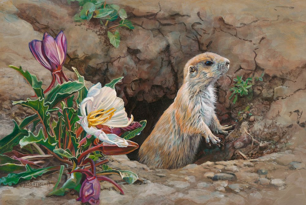 85 - Prairie Dog and Primrose, 12 x 14, Acrylic