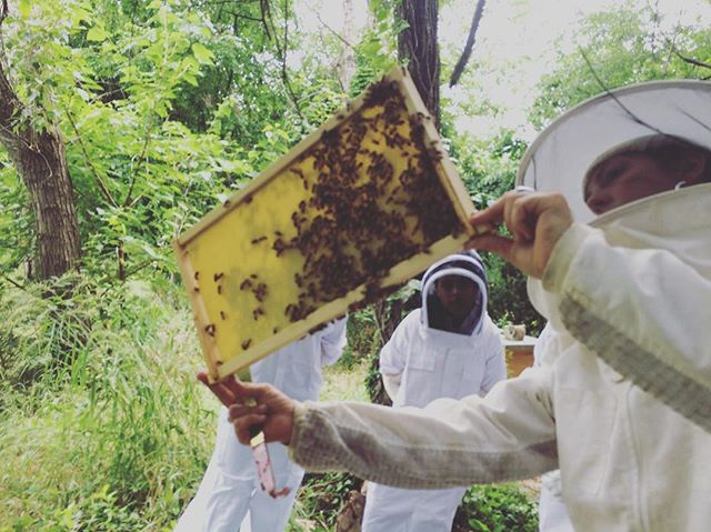 TODAY! 7th Annual NYC Honey Festival. Beach 106th St Rockaway, Queens Honey tasting competition, costume contest, bee marketplace, food and beer, live music at 5pm!! #nychoney #nychoneyfest #savethebees #localhoney #nycbees #nycbeekeeping #rockawaybeach