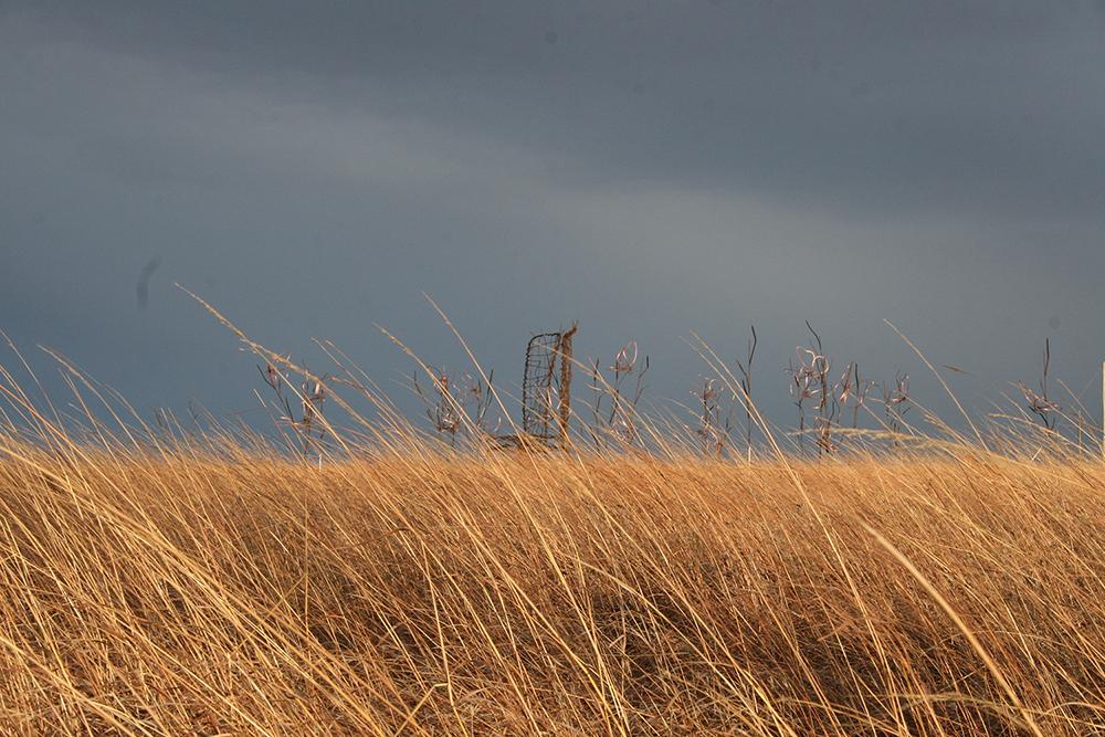 prairie_6985.jpg