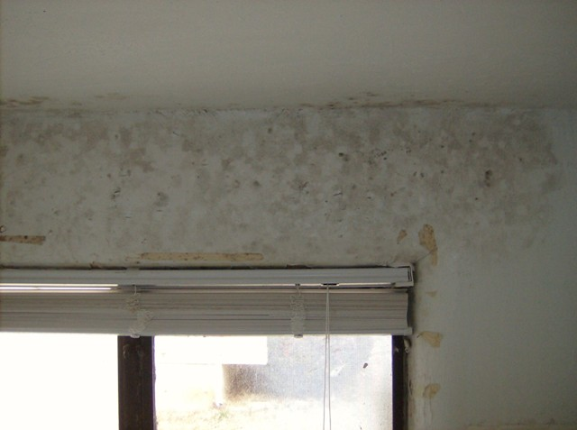 b4_and_after_bathroom_mold_clean_3.64172246_std.JPG