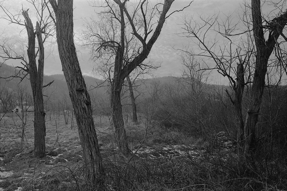 Dead trees.  Gid Brown Hollow.  Rappahannock County, Virginia.  2012.