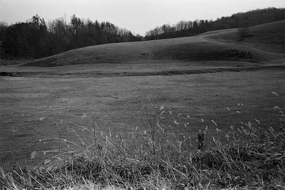 Pasture and foxtail.  Madison County, Virginia.  2009.