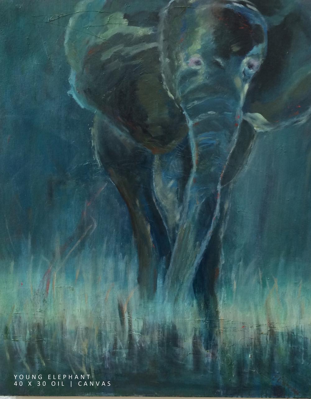 Young Elephant NEWs.jpg