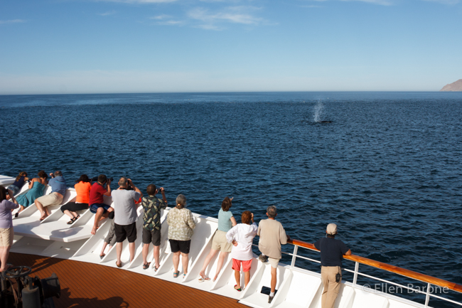 Humpback whale, Safari Endeavour, Sea of Cortés.