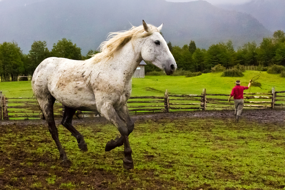 Gaucho with horses, La Estancia, Valle California, Patagonia Sur, Chile, South America