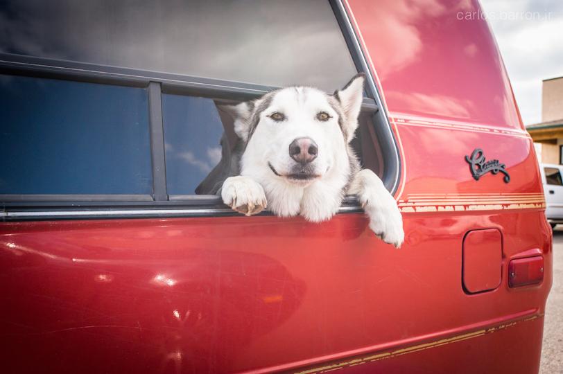 puppy_van_cbarronjr