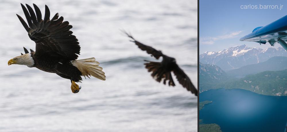 Anchor Point Eagles - AK West Air