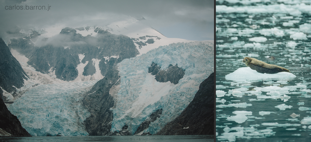 Northwestern Glacier | Sea Lion