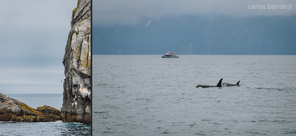 Kenai Fjords Killer Whales | © Carlos Barron Jr