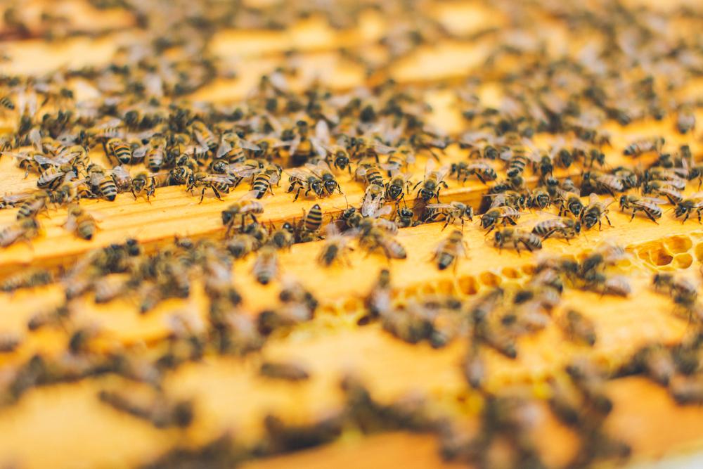 gl-bees-snakes-7504.jpg