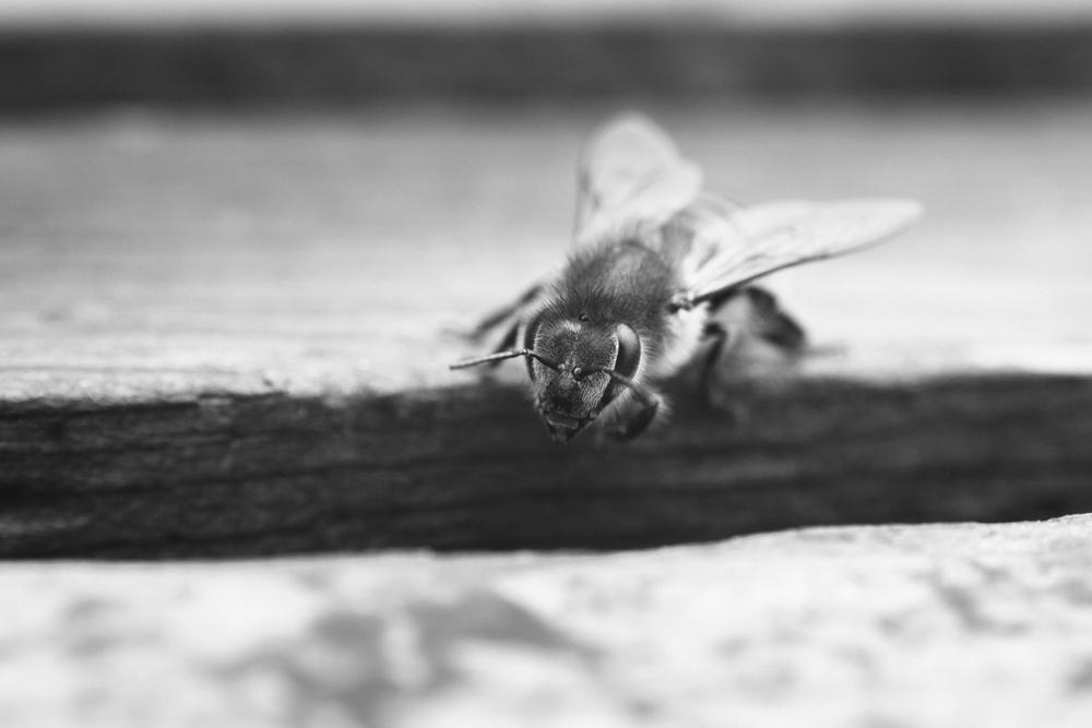gl-bees-snakes-7558.jpg