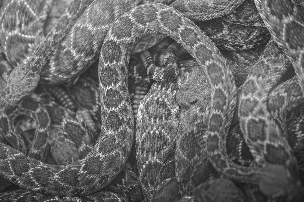 gl-bees-snakes-7672.jpg