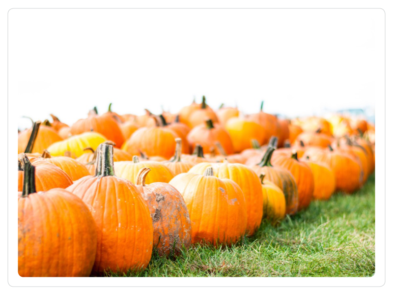 - Come find the perfect pumpkin!