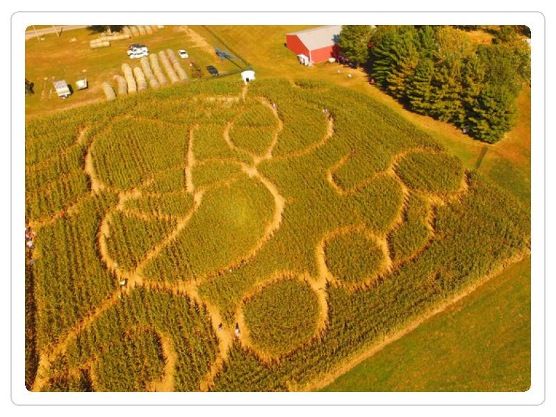 corn maze.png