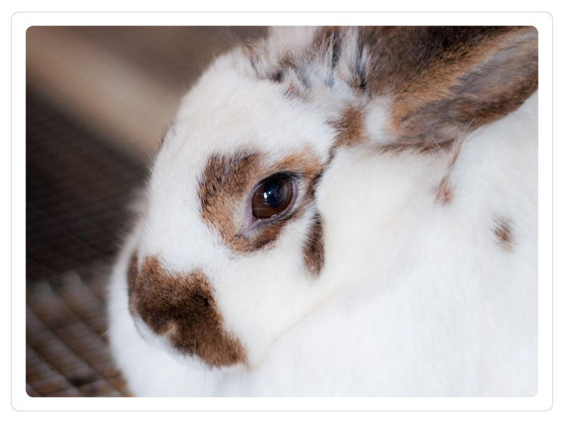rabbit 3.png
