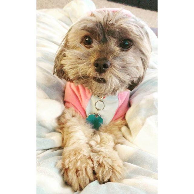 Puppy eyes for days. 🐶 😍 #dogsofinsta #dogsofig #dogs #puppyeyes #aww