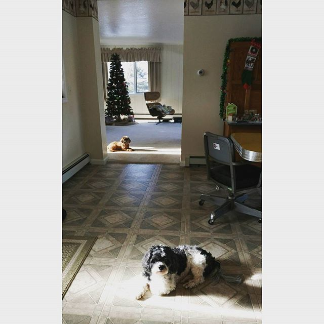 Puppies always know where to find the sunny spots. 🐶 🌞🏡