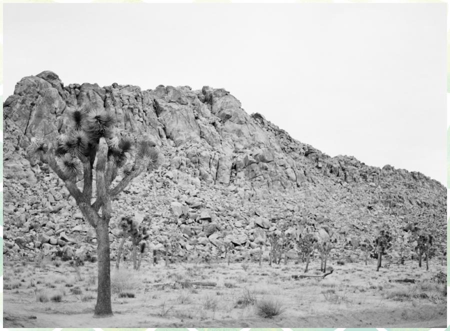 Ariane Moshayedi Photography_0238.jpg