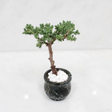 Plant Karma