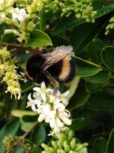 bumble-bee-2-225x300.jpg