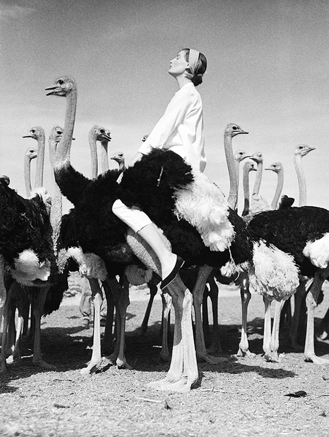 "'""Wenda and the Ostriches"" with Wenda + Norman Parkinson + South Africa Vogue"