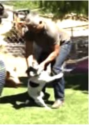 Cesar Millan manhandles a dog in a recent episode of Cesar 911.