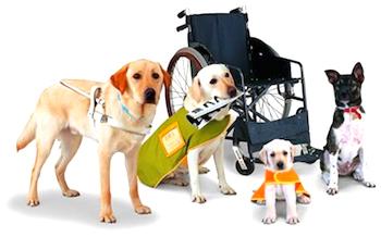 service-dogs.jpg
