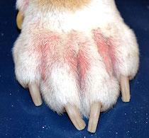 fear dog (4).jpg