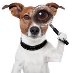 Dog Myth.jpg