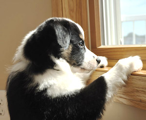 separation-anxiety-dogs-2.jpg