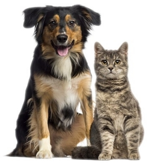 cat-dog1.jpg
