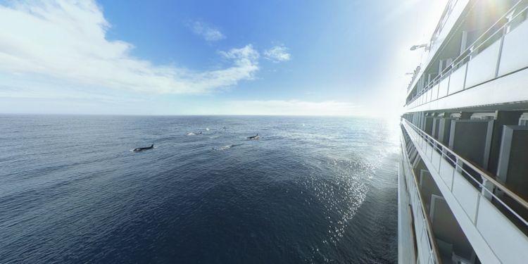 Matua - Pod of Orcas