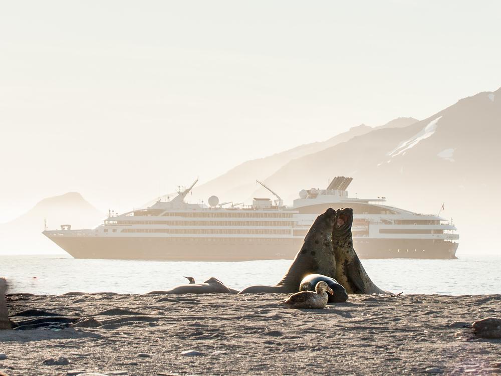Fur Seals - St. Andrew -   Kelly Redhead