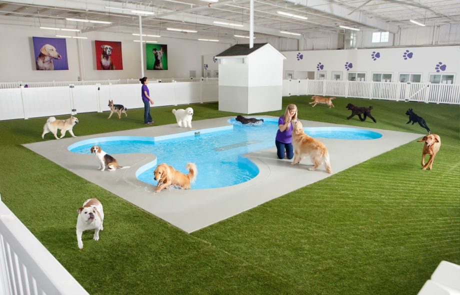 "Paradise for Paws specializes in something called ""pet resorts."" Photo: Paradise for Paws."